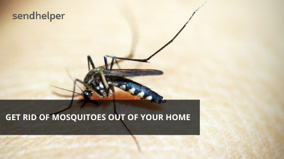 Get rid of mosquitoes using professional pest control services from Sendhelper.